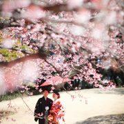 桜の下での画像14