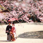 桜の下での画像20