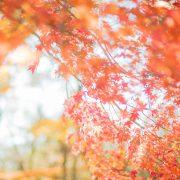 紅葉と和装は相性ばつぐんの画像2
