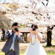 桜フォトウエディング